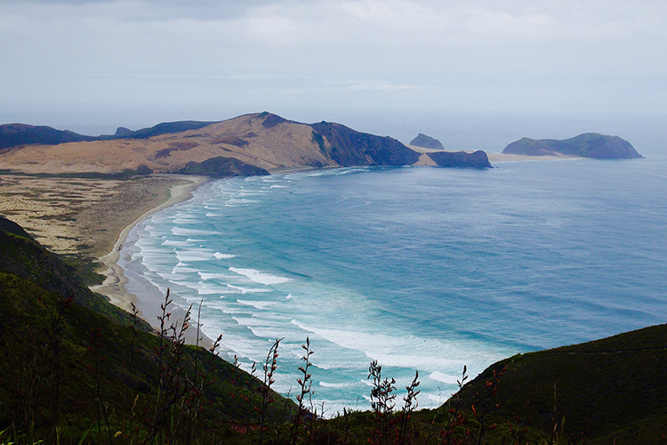 Huckberry - New Zealand's north island