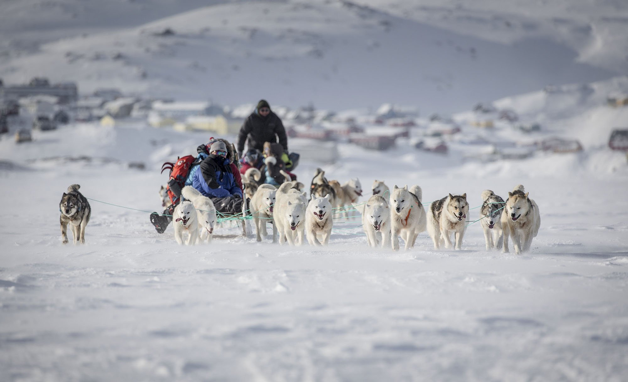 Dog-sledding in Greenland